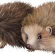 Vettoriale Stock : Two-toed hedgehogs