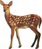 European Roe Deer, Capreolus capreolus — Stock Vector