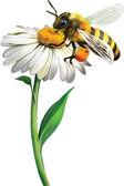 Bee on chamomile — Stock Vector