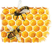 Abejas y miel — Vector de stock