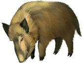 Satnding Boar — Stock Vector