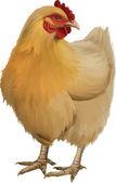 Orange chicken — Stock Vector