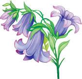 Bluebells flowers — Stock Vector