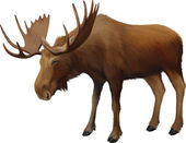 Moose. Adult male elk — Vector de stock