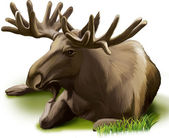 Moose. Adult male elk — Wektor stockowy