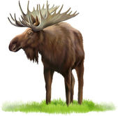 Moose. Adult male elk — Stock Vector