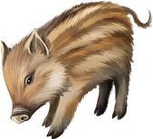 Wild boar piglet — Stock Vector
