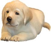 Cute little puppie of yellow labrador — Stock Vector