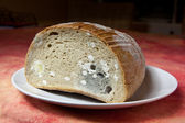 Mildew bread — Stock Photo