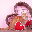 Valentine Cat — Stock Photo #36808253