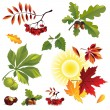 Royalty-Free Stock Vector Image: Autumn foliage