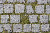 Square stones texture with grass — Stockfoto
