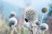 Bee eats a thistle — Stock Photo
