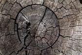 Shabby cut tree trunk — Stock Photo