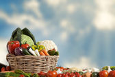 Basket of vegetables and blue sky — Stock Photo