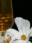 White cosmos with glass of wine in foreground — Stock Photo