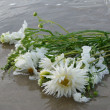 Stock Photo: White Flowers on Shore
