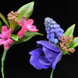 A Buttonhole of Muscari, Hyacinth petals and Anemone — Stock Photo