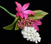 A Buttonhole of Muscari, Hyacinth petals and Anemone — Stock Photo