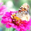 Dreamlike photography of a butterfly on a flower — Stock Photo #13123613