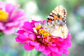 Dreamlike photography of a butterfly on a flower — Stock Photo