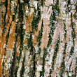 Tree bark background — Stockfoto