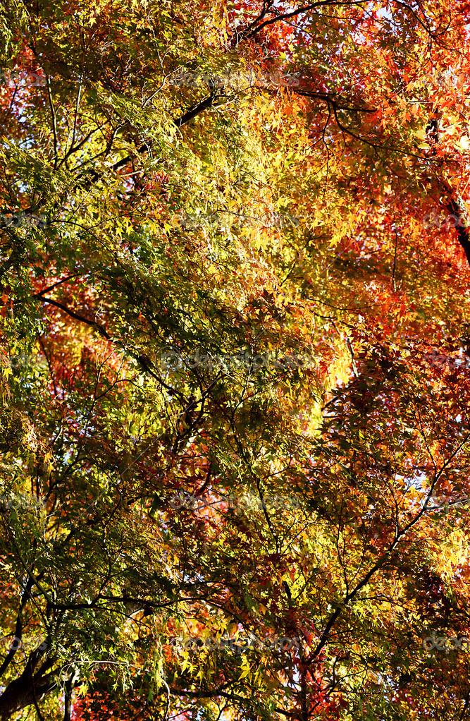 枫叶在秋天 — 图库照片 #34277907