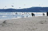 Baltic beach with gulls — Stock Photo