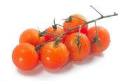 Wiśniowe pomidory na winorośli z kropli wody. — Zdjęcie stockowe