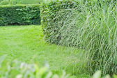 Peaceful Green Garden — Stock Photo