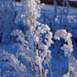 Stock Photo: Branch in frost