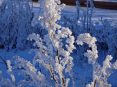 Branch in frost — Stock Photo
