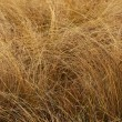 Withered grass — Stock Photo
