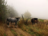 Horses in the mist — Stock Photo