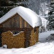 Cabin in snowy forest — Stock Photo #20020939