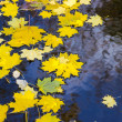 Autumn leaves on water — Stock Photo #33544171