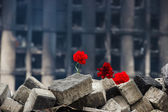 Carnations on a barricade in Kiev — Fotografia Stock