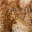 Macro Wool red dog - Stock Photo