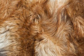 Macro Wool red dog — Stock Photo