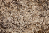 The texture of the fur sheepskin — Stock Photo