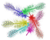 Guinea fowl feathers are painted in bright colors. collage — Stock Photo
