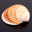 Stock Photo: Seshell