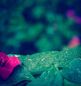 Beautiful Nature in the Rain — Stock Photo