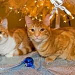 Tabby cats under Christmas tree — Stock Photo #11501319