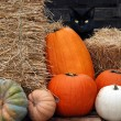 Stock Photo: Black cat with fall pumpkins