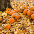 Stock Photo: Rotten pumpkins in leaves