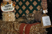 Cat napping on hay bale — Stock Photo