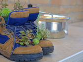 Cacti in work boots — Stock Photo
