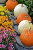 Autumn mums and pumpkins — Stock Photo