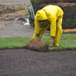 Man laying sod in the rain — Stock fotografie